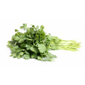 Herbs, Bunched Cilantro-Organic
