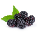 Blackberries-Organic