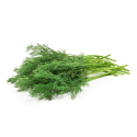 Herbs, Dill-Organic-Healthy Roots